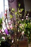Fleur de pêche Image stock