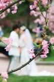 Fleur de pêche avec l'amoureux de couples Photos stock