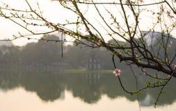 Fleur de pêche dans le lac voisin sword de coucher du soleil, Hanoï Vietnam Photos stock