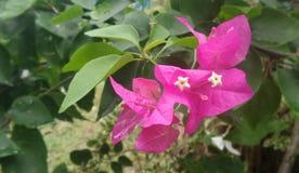 Fleur de papier rose Images libres de droits
