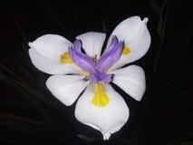 fleur de papillon 6 image stock