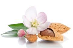 Fleur de paradis avec des écrous d'amande Photo stock