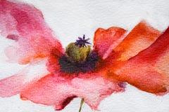 Fleur de pavot d'aquarelle Photos stock