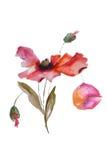 Fleur de pavot d'aquarelle Photographie stock