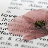 Fleur de pavot sur le livre Images libres de droits