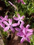Fleur 1 de pays photo libre de droits