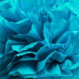 Fleur de Peper Photographie stock libre de droits