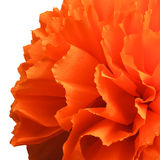Fleur de Peper Images libres de droits