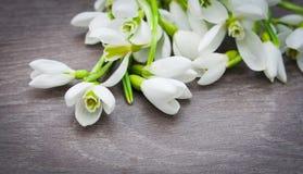 Fleur de perce-neige Photo libre de droits