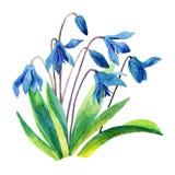 Fleur de perce-neige de ressort Photo libre de droits