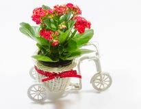 Fleur de petit morceau de vélo de pot de fleurs Photo stock
