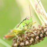 Fleur de photo d'insecte Photographie stock libre de droits