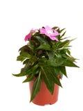Fleur de pièce. Photographie stock libre de droits