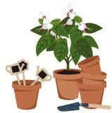 Fleur de pièce et pots de fleur Images libres de droits