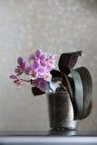 Fleur de pièce sur un fond clair Photos libres de droits
