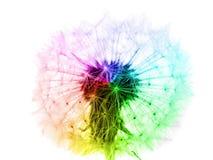 Fleur de pissenlit dans des couleurs d'arc-en-ciel d'isolement Image stock