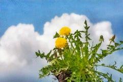 Fleur de pissenlit de dessin d'aquarelle photographie stock libre de droits