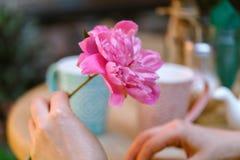 Fleur de pivoine de la prise une de femme en café de rue image stock