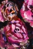 Fleur de plan rapproché de peinture à l'huile Macro rose de plan rapproché de pivoine de grandes fleurs violettes rouges sur la t images libres de droits