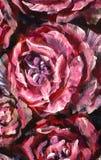 Fleur de plan rapproché de peinture à l'huile Macro rose de plan rapproché de pivoine de grandes fleurs violettes rouges sur la t photos libres de droits