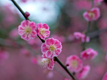 Fleur de plomb Image stock