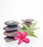 Fleur de plumeria, lames de bambou et pierres rouges de rivière Image libre de droits