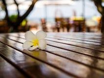Fleur de Plumeria sur la table en bois Photo libre de droits