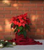 Fleur de poinsettia de Noël, euphorbe Pulcherrima enveloppées dans l'écharpe rouge et décorations sur la table en bois sur le mur photos libres de droits