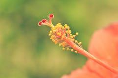 Fleur de pollen Photos stock