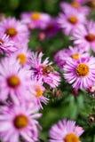 Fleur de pollination d'abeille Images libres de droits