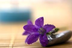 Fleur de pourpre de station thermale Photographie stock libre de droits