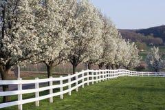 Fleur de printemps Photographie stock