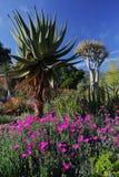 Fleur de printemps en Californie aux jardins botaniques de Taft, Ojai C Photos stock