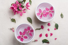 Fleur de prunier Photos libres de droits