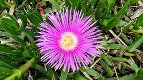Fleur de rayon de Sun Images libres de droits