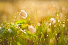 Fleur de ressort Image libre de droits