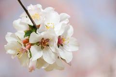 Fleur de ressort Photographie stock libre de droits