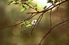Fleur de ressort Images stock