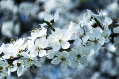 Fleur de ressort Photographie stock