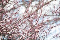 Fleur de ressort Photo libre de droits