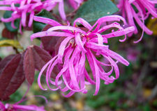 Fleur de ressort Image stock