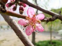 Fleur de ressort Photos libres de droits