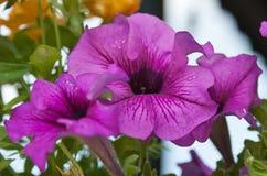 Fleur de ressort dans le jardin botanique Image stock