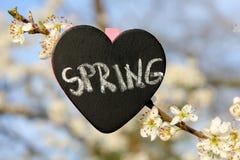 Fleur de ressort de coeur de tableau Image stock