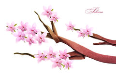 Fleur de ressort de Sakura Image stock