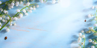 Fleur de ressort de vallée d'Art Lily sur le fond bleu Images libres de droits