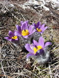 Fleur de ressort en Russie Photographie stock