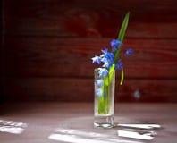 Fleur de ressort, plan rapproché sur la surface en bois Photos stock