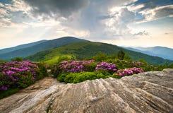 Fleur de rhododendron sur le journal appalachien bleu de Ridge Photographie stock