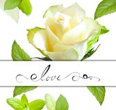 Fleur de Rose Photographie stock libre de droits